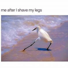 Image result for When you just shaved your legs bird meme