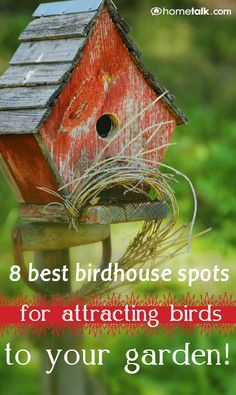 8 of the BEST Birdhouse Spots for Attracting Birds in Your Garden!
