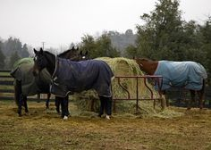 Winter Wood Chewing in Horses