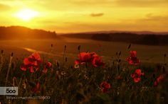 sunset by lutzklapp. Please Like http://fb.me/go4photos and Follow @go4fotos Thank You. :-)