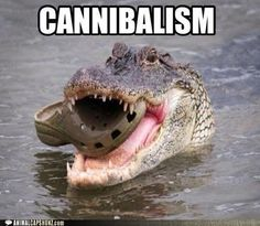 the croc who ate the croc.
