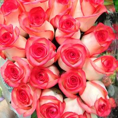 Beautiful fresh #Roses at #Louisville #Costco today. 16.99 for 2 dozen. Best deal in town. Plan for #Derby!