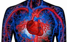 Scholars will learn about the human body including the circulatory system, the nervous system, the respiratory system, and the skeletal system.