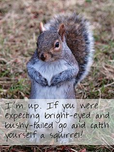 I didn't write a super awesome, amazingly insightful list this week, but I have an excuse (actually forty) as to why. Good Morning Animals, Cute Squirrel, Squirrels, Capybara, Gerbil, Albino, Disney Family, Rodents, Chinchilla