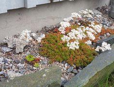 Kuvahaun tulos haulle japanilainen puutarha
