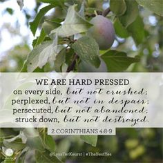 """""""We are hard pressed on every side, but not crushed - perplexed, but not in despair - persecuted, but not abandoned - struck down, but not destroyed."""" 2 Corinthians 4:8-9 (NIV) // When the pain of life feels like it's crushing you, God just might have a purpose in it. CLICK for more insight on this process from @LysaTerKeurst in today's devotion."""