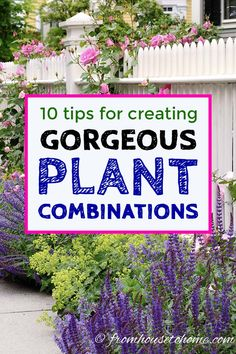 Garden Design These tips for creating plant combinations in your yard will help make your garden landscaping look beautiful. Great ideas for updating your garden design with beautiful flowers, bushes and perennials. Diy Gardening, Gardening For Beginners, Flower Gardening, Different Plants, Different Flowers, Landscape Plans, Landscape Design, How To Landscape, India Landscape