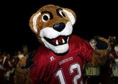 WSU Cougars Football Wsu Football, Keith Jackson, Washington State University, A Team, Ideas Para, Teddy Bear, Gray, Country, Cover