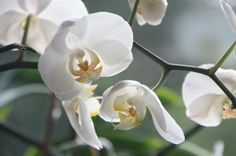 Tipps und Tricks rund um die Orchideen-Pflege