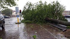 Boom #emmaplein omgevallen door #storm. Wordt zsm verwijderd ivm gevaar verkeer. Lvk