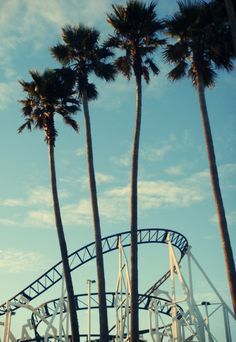 Roller Coasters and Palm Trees...yes please.