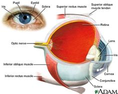 #Anatomy of the #Eye. Visit :http://www.jpeyehospital.com Meet Our #EyeSpecialist #WhatsApp :- +91- 9914874442, #CallUsNow :- +91- 9216066613 #EyeCareHospital #JpeyeCare #Chandigarh #Mohali #India #jpeyehospital #Cataract #Glaucoma #Lasik