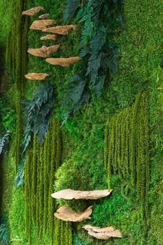 Look deep into Nature and you will understand everything better 🌱💡💕 #PlantedDesign #MossWall #MossWalls #Moss #MaintenanceFreeMoss #CustomDesign #GreenThumb #MossBoss #NatureLovers #OutdoorLiving #PlantArt #PreservedMoss #PreservedPlants #PlantPainting #HomeDecor #GoGreen #EtsySeller