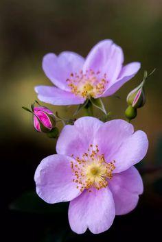 A simplicidade fez de mim, uma linda flor.