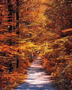 Krásna Kvačianska dolina v jesenných farbách...  #praveslovenske od @tomashrozensky