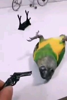 Funny parrot videos funny animal videos try not to laugh videos can t stop laughing funnyparrot funnyanimals funnypets funny in unserer welpengalerie finden sie unglaublich niedliche hunde und welpen! Funny Dog Memes, Funny Dog Videos, Funny Animal Memes, Funny Animal Pictures, Funny Dogs, Funny Animals With Captions, Cute Funny Animals, Cute Baby Animals, Funny Birds