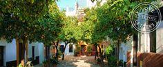 Love Letters: Seville
