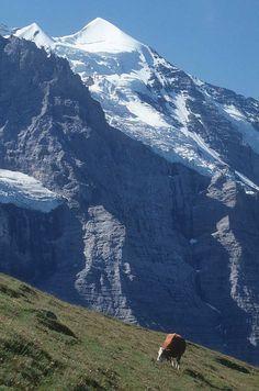 ❦  Switzerland The World Most Beautiful Place: Switzerland Mountains