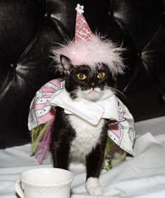 """When we first heard of the Cat Fashion Show at the Algonquin Hotel, we thought, """"You've gotta be kitten me."""""""