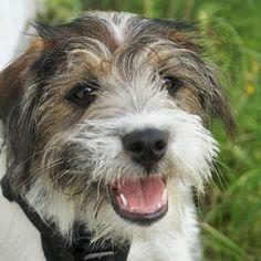 heididahlsveen:  #atsjoo Friday evening #puppy #valp #hund #dog