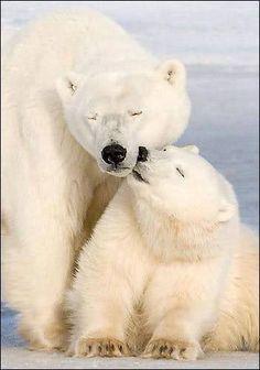 kissing it's mom !!!!