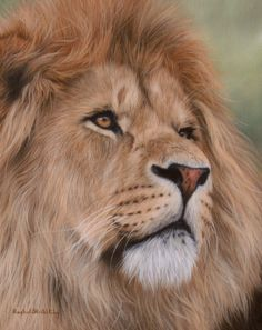 Animal paintings, animal prints and pet portraits. Beautiful oil on canvas fine art by wildlife artist Rachel Stribbling. Wildlife Paintings, Wildlife Art, Animal Paintings, Animal Drawings, Oil Painting Gallery, Oil Painting Pictures, Realistic Oil Painting, Lion Painting, Lion Photography