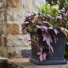 Dark rich colors in a container garden welcomes the change of seasons near the entryway. #autumn #mossmountain #joy #sharethebounty #crescentgarden