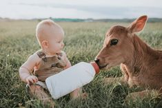 First birthday pictures little kid on farm little boy with baby cow feeding bott. - First birthday pictures little kid on farm little boy with baby cow feeding bottle to baby cow - Country Baby Pictures, Baby Boy Pictures, Baby Photos, Free Photos, Cow Birthday, Baby First Birthday, Funny Birthday, 1st Birthday Pictures, Farm Pictures