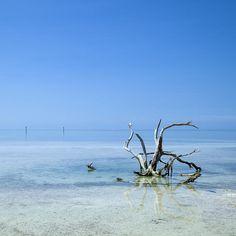 "FINE ART AMERICA ""Florida Keys Lonely Root"". More; http://www.melanieviola-fotodesign.de/shops-kunst-kaufen.html"