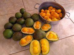 Pequi ou Souari Nut (Caryocar brasiliense) é uma fruta brasileira, de cor amarela, e tem um cheiro e sabor forte. Fruto de Pequi é uma...