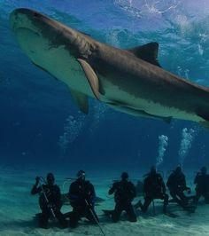 Plonger au milieu des requins aux Bahamas!