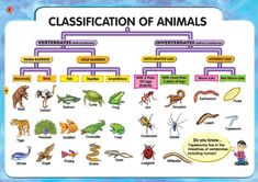 Two Classification Of Animals Vertebrates And Invertebrates Vertebrates And Invertebrates Animal Classification Animal Science