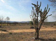 CNA e Embrapa assinam acordo para desenvolver forrageiras adaptadas à seca do semiárido brasileiro