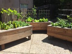 Raised planter boxes. They can go anywhere.
