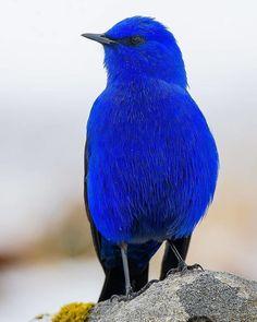 Name this beautiful bird 😍 Photo by All Birds, Cute Birds, Pretty Birds, Little Birds, Exotic Birds, Colorful Birds, Exotic Pets, Exotic Animals, Beautiful Creatures