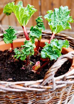 Green Garden, Garden Plants, Fungi, Flora, Succulents, Home And Garden, Instagram, Vegetable Gardening, Lawn And Garden