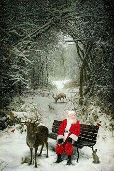 I love Christmas !!!
