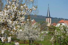 Sur les Routes de la bière d'Alsace, le patrimoine, l'histoire et la gastronomie de ces régions prennent vie. Des escapades originales et instructives pour une expérience culturelle et culinaire inédite autour de trois ambiances.