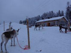 Ферма за елени