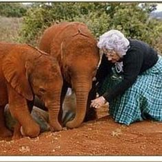 Beautiful.. From: @imani.shakur - My WCW is Kenya born Dame Daphne Sheldrick . Google her if you do not know who she is! In brief She was responsible for raising and reintegrating wild orphaned and injured animals for over 30 years. - For info about promoting your elephant art or crafts send me a direct message @elephant.gifts or emailelephantgifts@outlook.com . Follow @elephant.gifts for inspiring elephant images and videos every day! . . #elephant #elephants #elephantlove