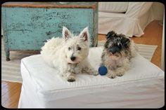 cottage pups