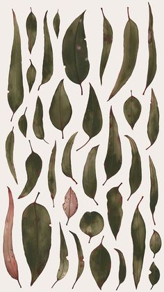 Australian Native Flora on Behance - Natalie Ryan