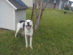 09/13/16-ROSENBERG, TX - Pets at Ft. Bend Animal Control September 8 at 5:41pm…