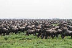 Serengeti National Park, Party Labels, Dreaming Of You, Safari, National Parks, Africa, The Incredibles, Mountains, World