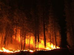 essays on forest fires