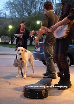 Free hugs being offered by the sweetest dog in downtown Grand Rapids, Michigan.