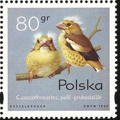 Hawfinch stamps - mainly images - gallery format