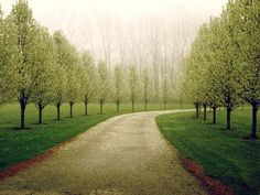 This will be the tree lined drive leading to my house. It's decided.