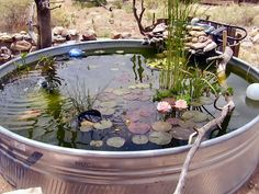 Stock tank water garden or small pond . I want one or more of these in our yard someday Outdoor Ponds, Ponds Backyard, Outdoor Gardens, Dream Garden, Garden Art, Garden Design, Garden Pond, Small Water Gardens, Small Space Gardening