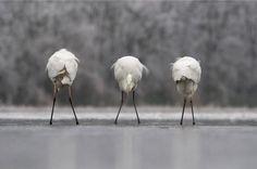 Výsledok vyhľadávania obrázkov pre dopyt european wildlife photographer of the year